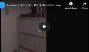 heavens-hummingbird