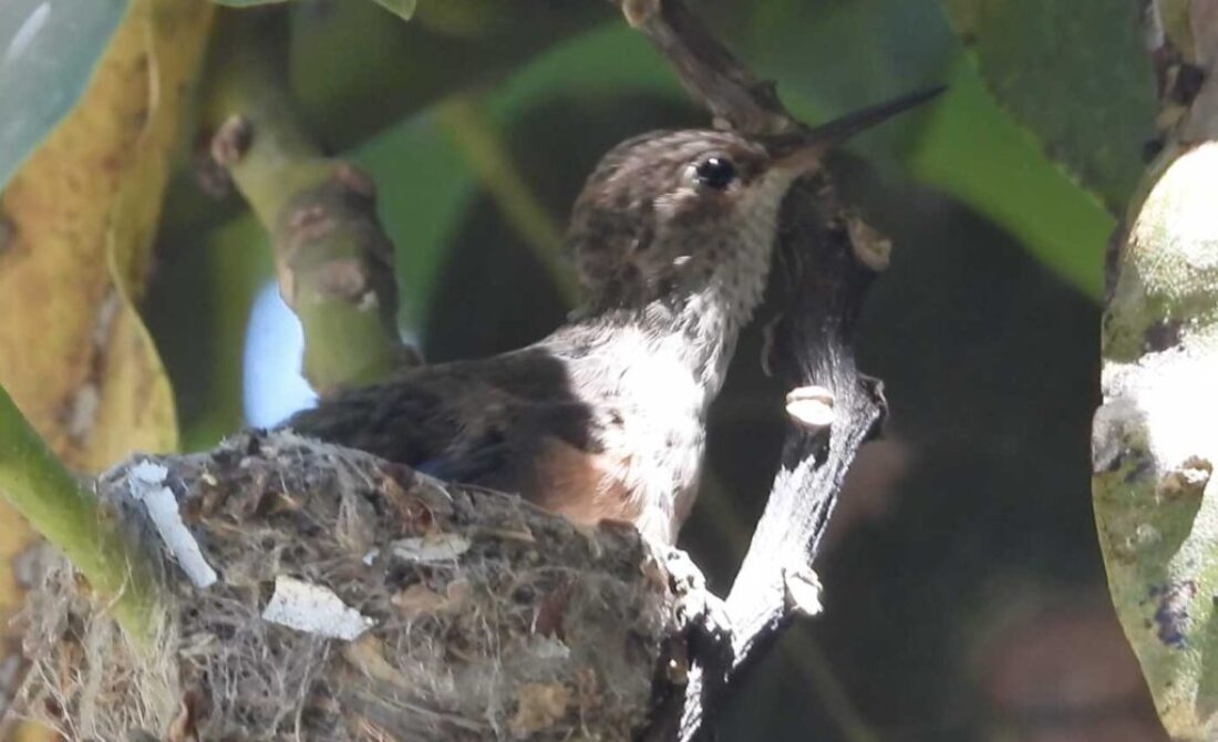Day 23 Leaves Nest