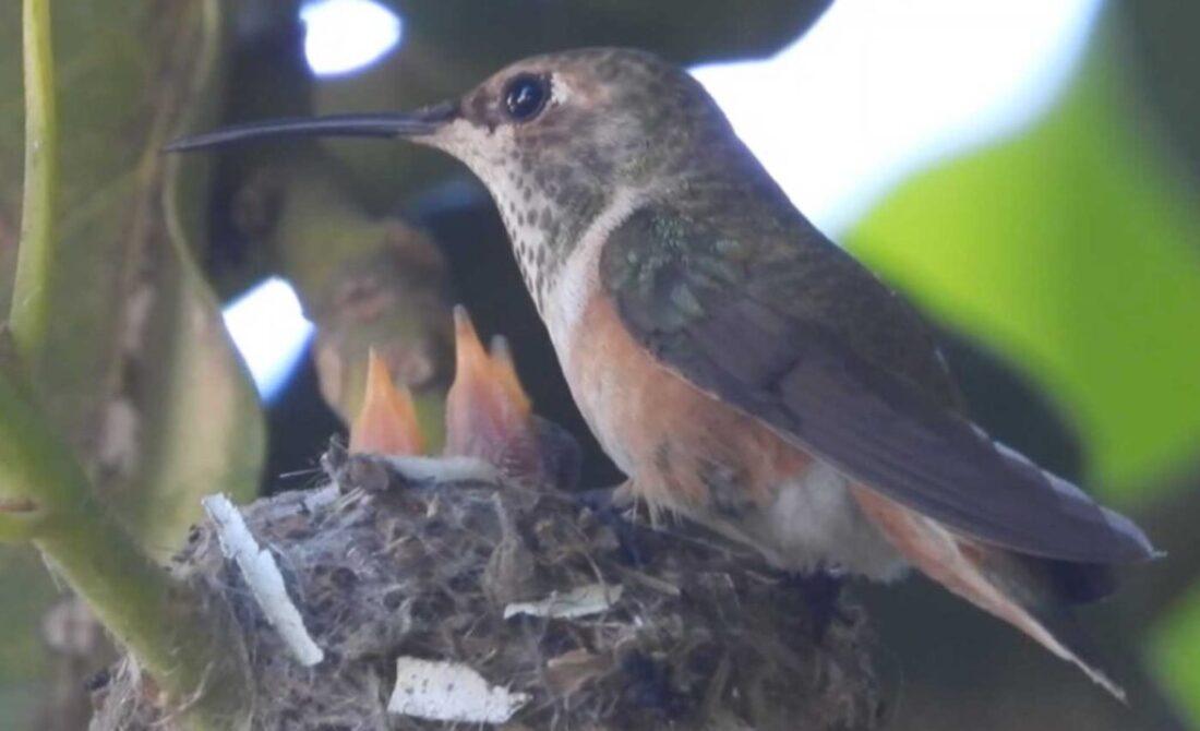 Day 7 Feeding Babies